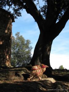 Tambo i l'alzina